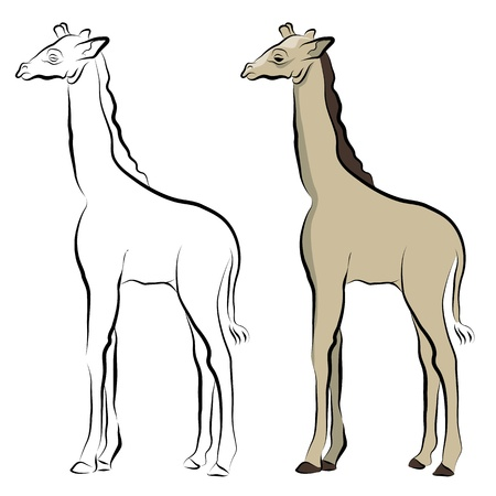 An image of a giraffe line drawing. Illustration