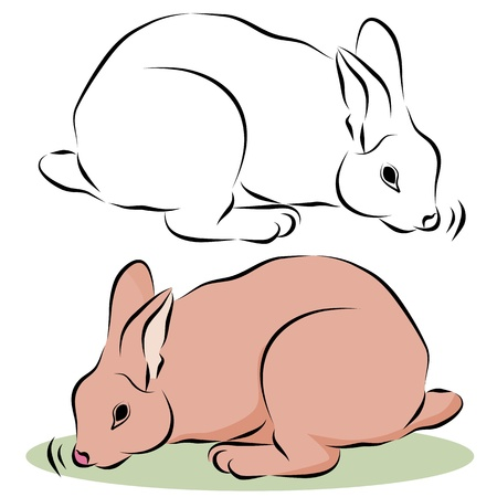 An image of a bunny rabbit sniffing line drawing. Illustration