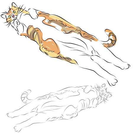calico: An image of a fat calico cat laying belly up line drawing.