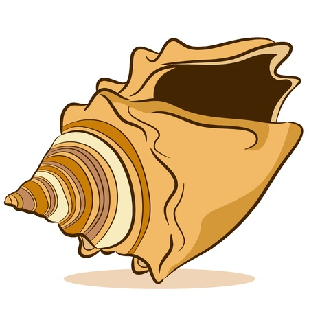 An image of a seashell drawing on a white background. Vector