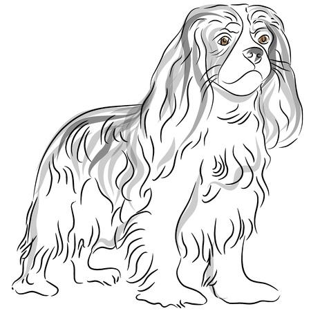 bred: Una imagen de un perro cavalier king charles spaniel de dibujo.