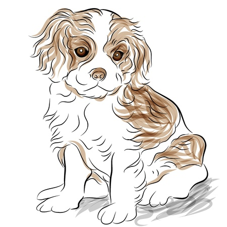 An image of a posed cavalier king charles spaniel puppy dog.