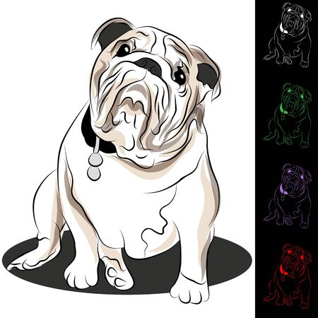An image of a bulldog with tag. Stock Vector - 9719377