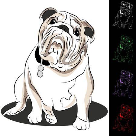 tag: An image of a bulldog with tag.