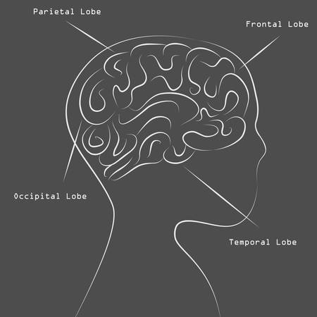 An image of a blackboard human brain map drawing. Vector