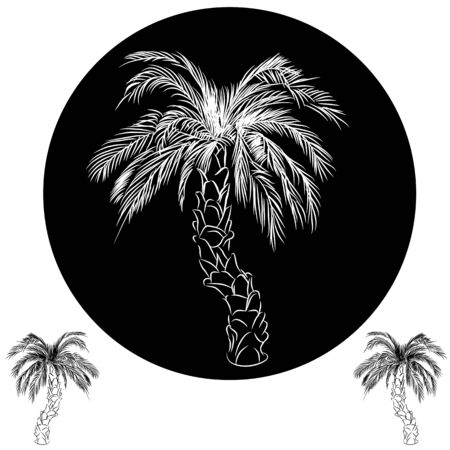 An image of a palm tree drawing. Vector