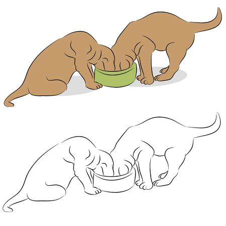 labrador: An image of a two Labrador puppies eating from a dog bowl.