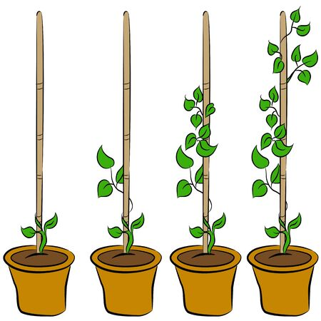An image of the stages of a growing plant. Vector