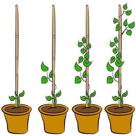 Een beeld van de stadia van een groeiende plant. Stock Illustratie