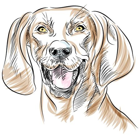 An image of the face of a Redbone Coonhound dog. Vector