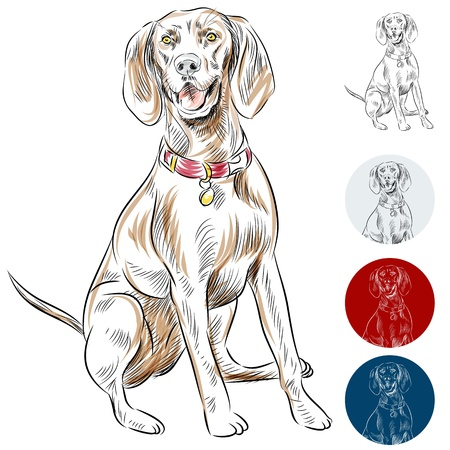 An image of a Redbone Coonhound dog. Vector