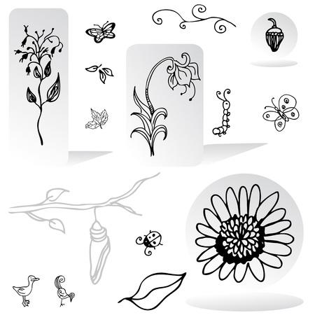 capullo: Una imagen de un conjunto de elementos de diseño de la naturaleza.