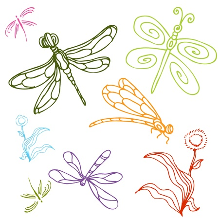 dragon fly: An image of a dragonfly drawing set.
