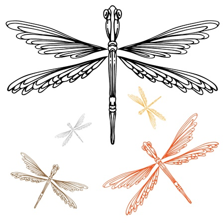 An image of a detailed dragonfly. Stock Vector - 10302340