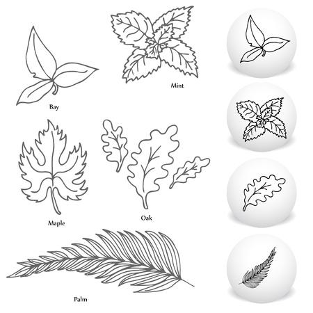 Een afbeelding van een set van de baai, esdoorn, mint, eiken en palmblad tekening in te stellen. Vector Illustratie