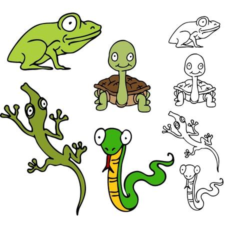 , 거북이, 도마뱀과 뱀 설정 파충류 개구리의 이미지. 스톡 콘텐츠 - 11271851