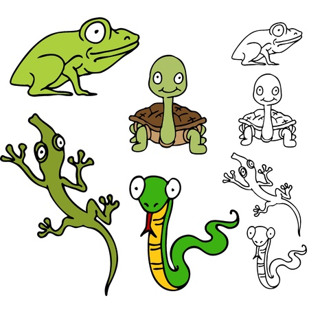 An image of a reptile frog set with, turtle, lizard and snake. Vector