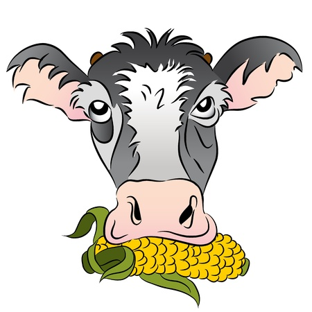 An image of a corn fed cow. Vector