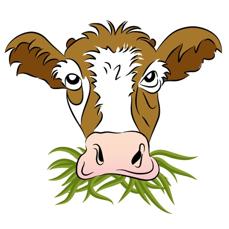 An image of a grass fed cow. Vector