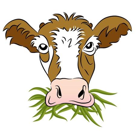 Een beeld van een gras gevoed koe.