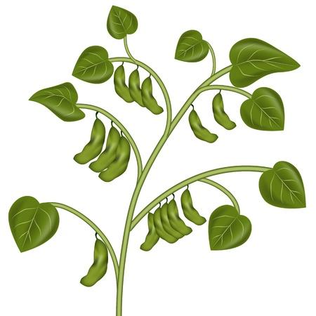 Een beeld van een soja plant.