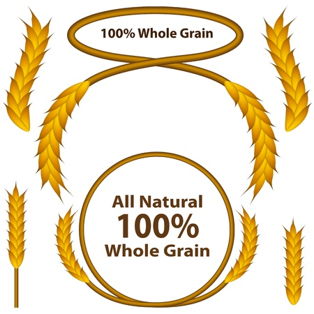 all in one: An image of a one hundred percent whole grain wheat grain set. Illustration