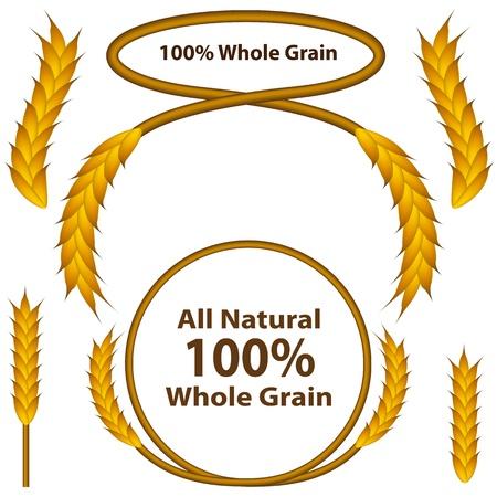clip art wheat: An image of a one hundred percent whole grain wheat grain set. Illustration