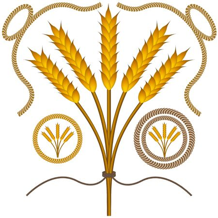 An image of roped wheat bushel with rope borders. Vector