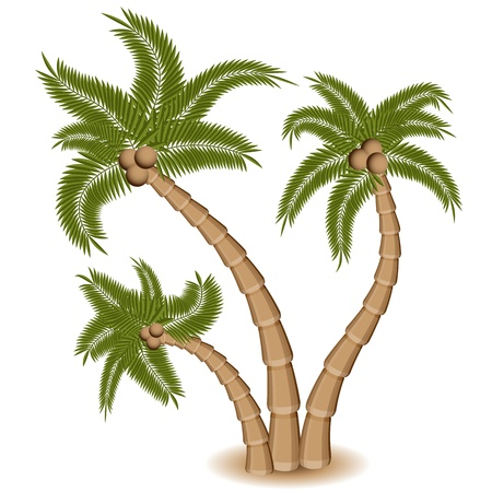 An image of a group of three palm trees. Иллюстрация