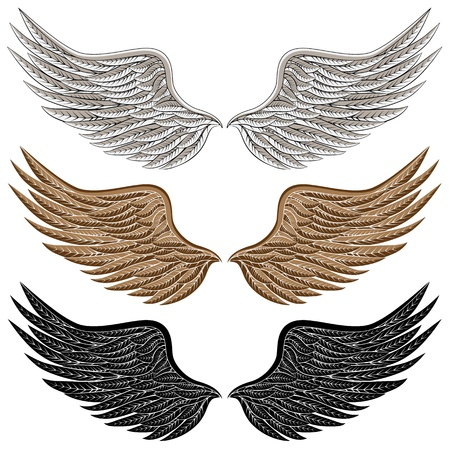 angel white: An image of a detailed bird wings. Illustration