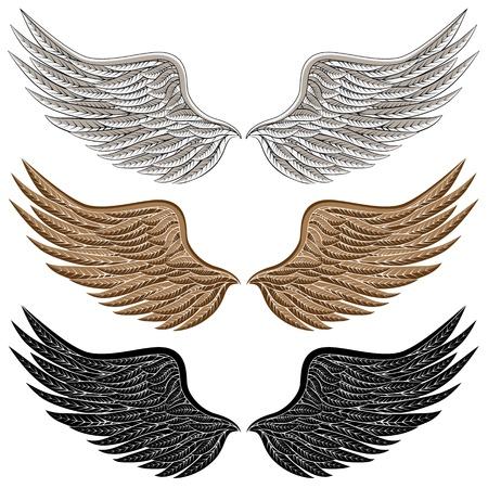 alas de angel: Una imagen de las alas de las aves m�s detalladas. Vectores
