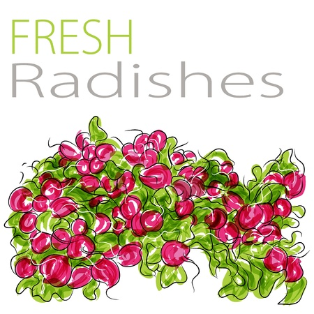 An image of a fresh radishes.