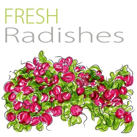 bushel: An image of a fresh radishes.