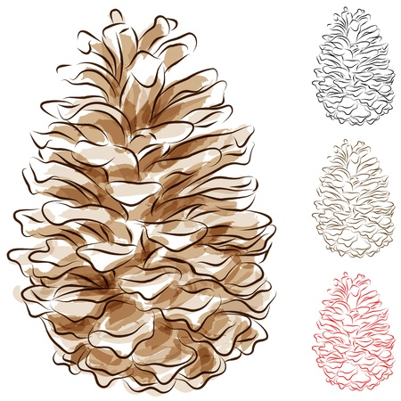 lines: An image of a watercolor pine cone. Illustration