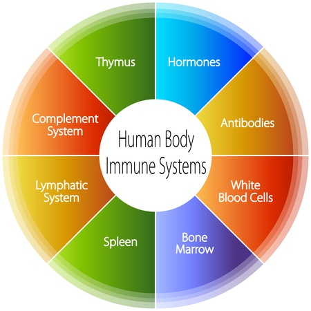 immunity: An image of a human body immune systems chart.