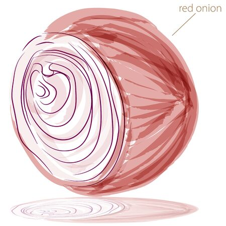 An image of a red onion watercolor painting.