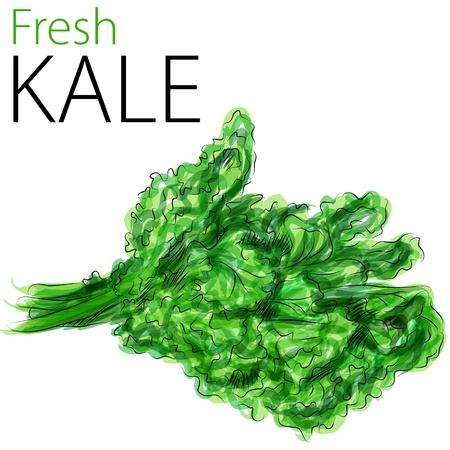 kale: An image of a watercolor drawing of fresh kale.