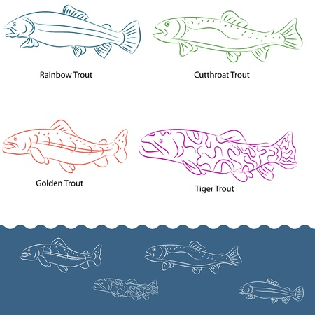 An image of a types of trout. Vector