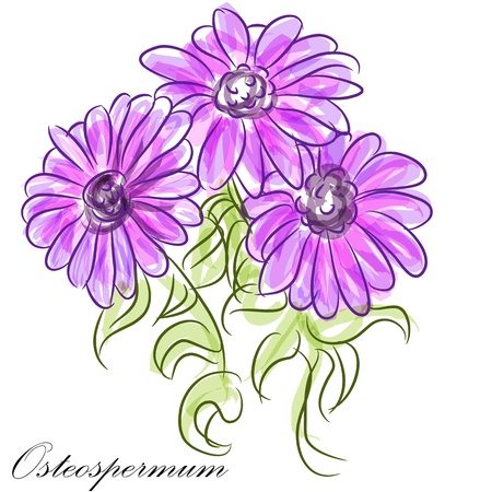 An image of a purple osteospermum daisies. Vector