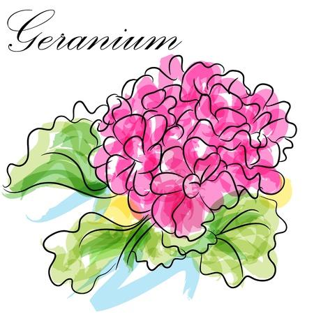 An image of a pink geranium flower. Vector