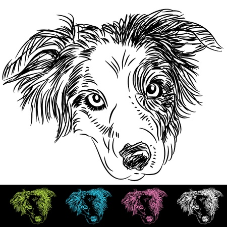 An image of border collie face set. Vector