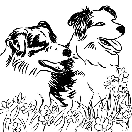 black and white line drawing: An image of two border collie dogs in a flower field.