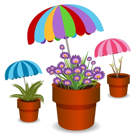 An image of a potted plants shaded by umbrellas.