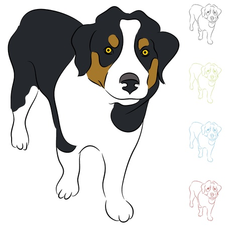 An image of a Border Collie puppy. Vector