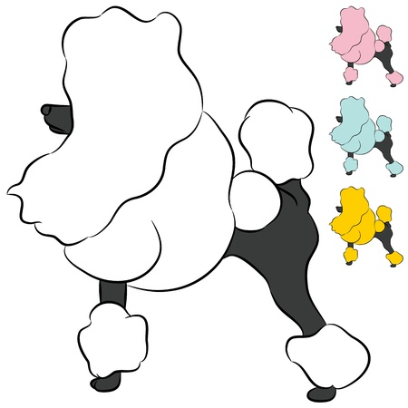 miniature poodle: An image of a groomed Miniature Poodle dog.
