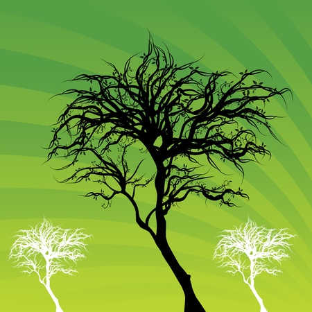 An image of a tree background.