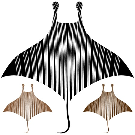scratchboard: An image of a manta ray drawing.