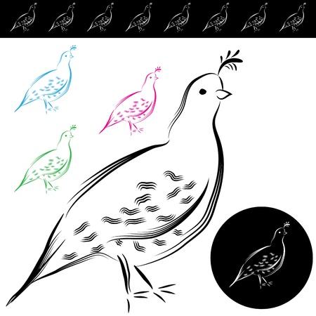 quail: An image of a quail drawing.