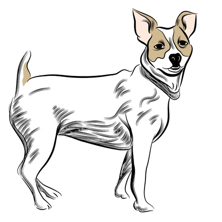 scratchboard: An image of a parsons jack russell terrier dog. Illustration