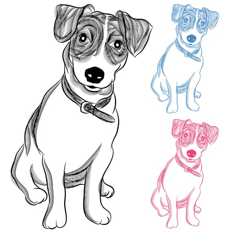 An image of an Irish Jack Russell Terrier dog. Vector